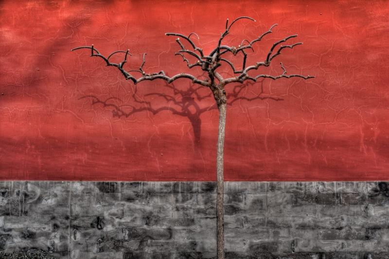 A barren tree in winter, in Beijing, China.