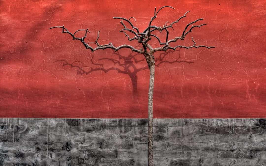 Barren Tree in Winter