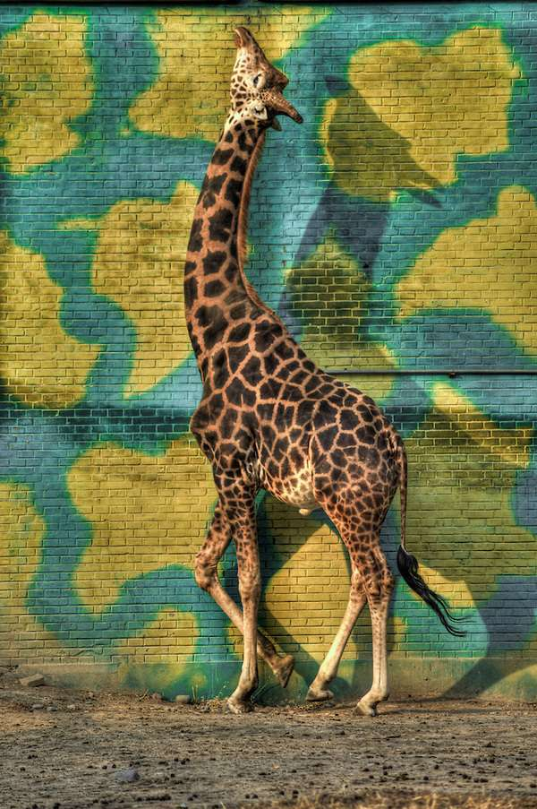 Neurotic Giraffe
