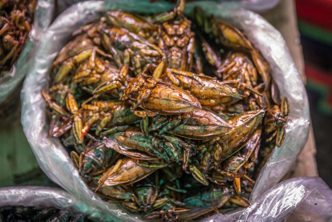 Insects as Snacks